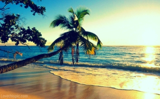 21664-Palm-Trees-At-The-Beach.jpg